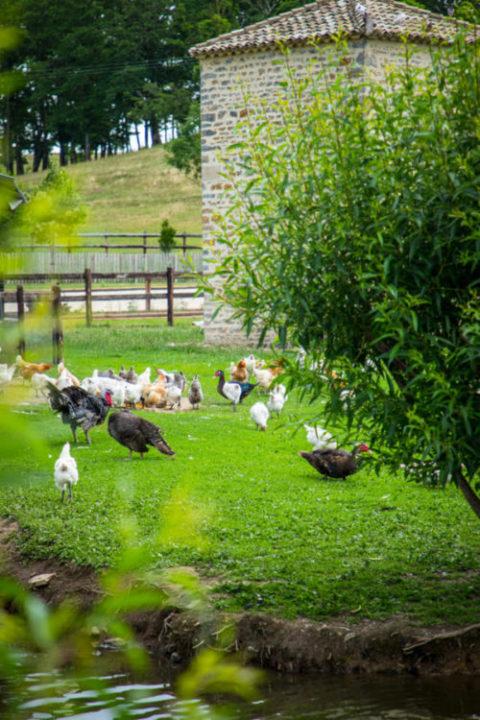 Rymska's farm